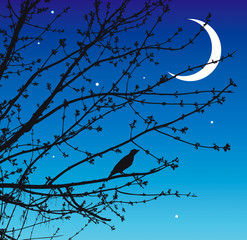 Night song of the nightingale