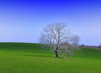Green grass and lonely tree