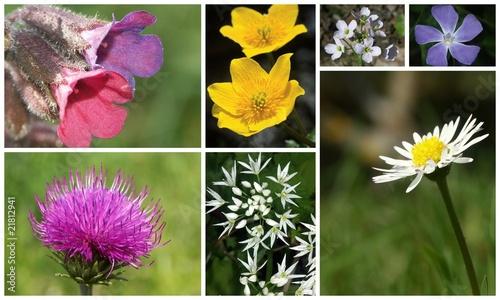 fleurs des champs au printemps de monique pouzet photo libre de droits 21812941 sur. Black Bedroom Furniture Sets. Home Design Ideas