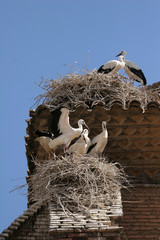 storks nest on a small town in spain