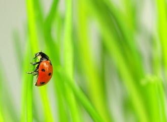 Beautiful ladybug on green leaves