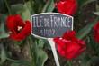 Ille De France Tulips