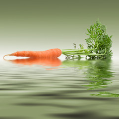 Carrot in the water