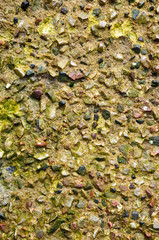 Stone texture with seaweed