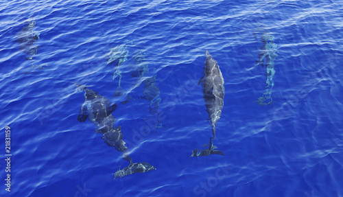 Dolphin Spinner dolphins underwater off Muscat