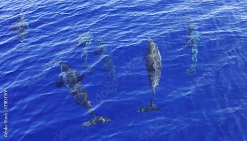 Foto op Canvas Dolfijn Spinner dolphins underwater off Muscat