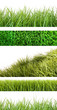 Assortment of different grass on white