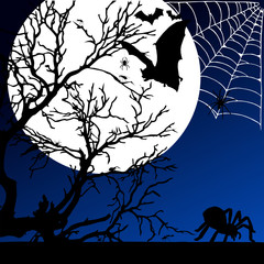 spider and bat on the moonlight illustration