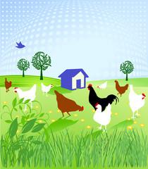 Hühner-Hof