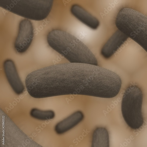 colony of bacteria