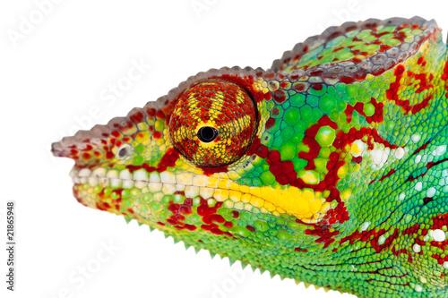 Fotobehang Luipaard Détail d'une tête de caméléon de La réunion