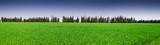 Prairie dans les Costières