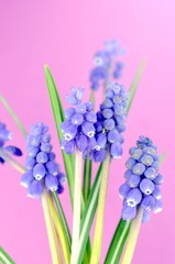Blümchen, Blüten