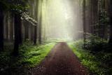 Fototapety Nebel im Wald