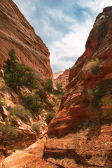 Reliefs of Zion canyon. Utah. USA