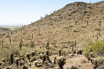 View from a Casa Grande Mountain trail
