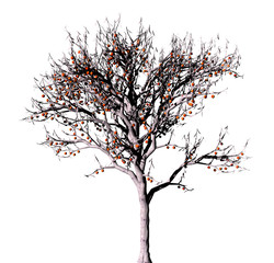 Dead tree on a white background.
