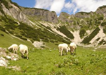 Alm mit Schafen