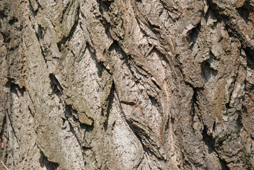 Texture from a tree bark