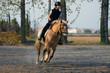 Bambina bionda galoppa con pony