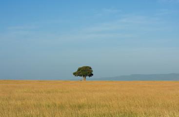 Paesaggio africano con baobab