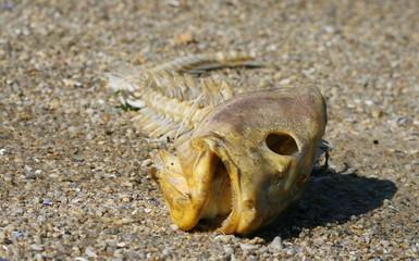 poisson,mort,arète,polution,poissons