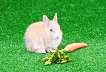 rabbit and big carrot