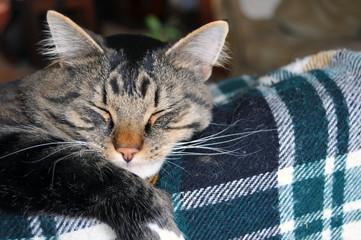 Closeup of snoozing cat