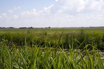 Typical Dutch nature
