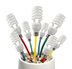 Light Bulbs attached to a colored cables growing in a pot