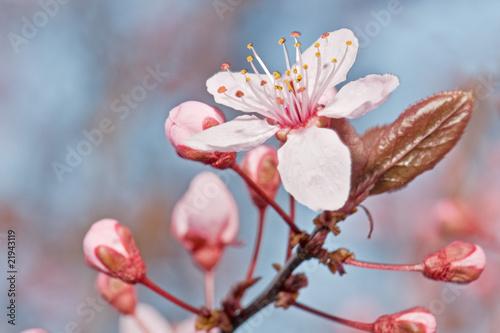 sezonowe-kwiaty-na-drzewach