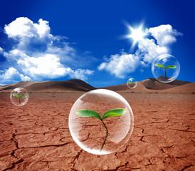 plant in a bubble
