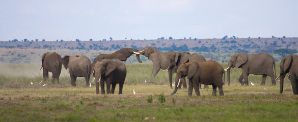 Elefanti in lotta