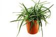 Aloe flower