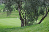Olive tree at golf course