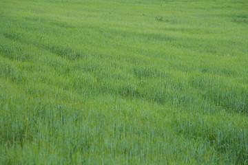 prados verdes primavera costa brava 3