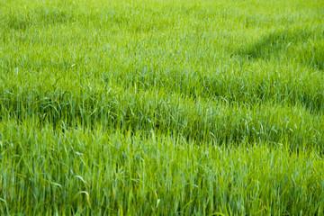 prados verdes primavera costa brava 5