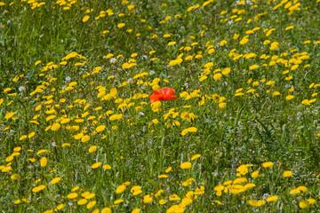 primavera multi color 2