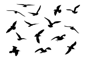 14 seagull silhouette