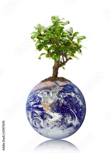 Plexiglas Bonsai Klimaschutz