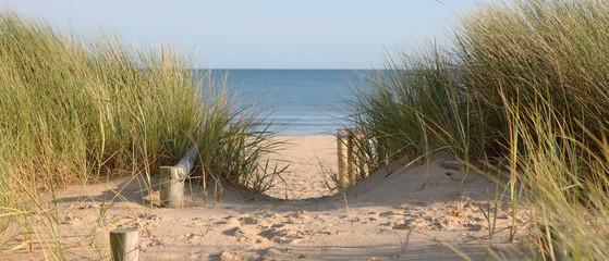 Beach Path Through Dunes