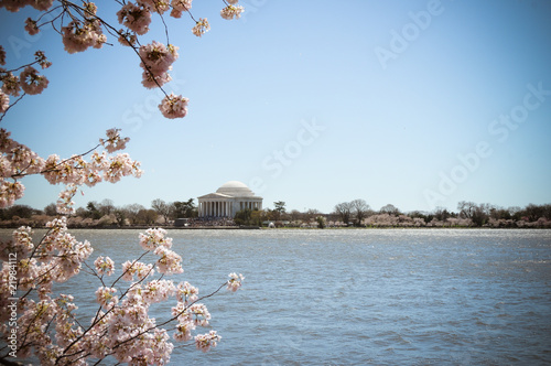 Jefferson Memorial Cherry Blossoms