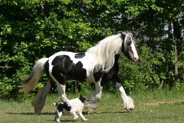 Im Gleichschritt Hund und Pferd