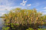 Papyrus im Okavango Delta