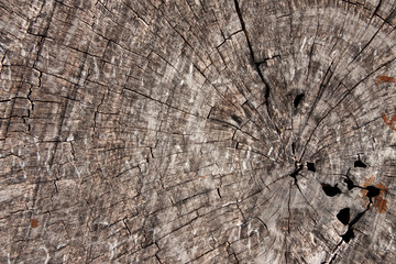 Texture of old teak wood
