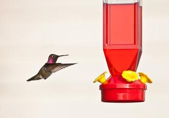 Hummingbird against light background