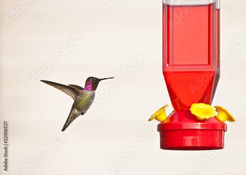 Hummingbird against light background