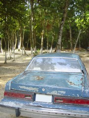 aged rusty old american car on jungle