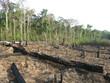 Abholzung - Brandrodung Regenwald, Amazonien Brasilien