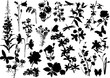 large set of flower silhouettes